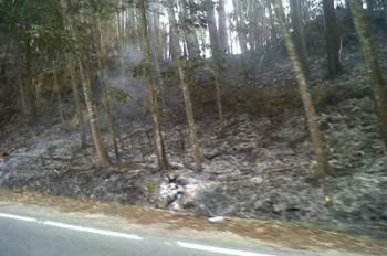 Disbun Siap Tindak Pembakar Lahan dan Kebun