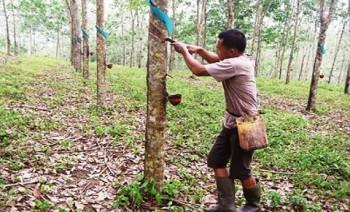 NTP Perkebunan Rakyat Turun