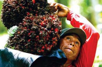 NTP Perkebunan Rakyat Naik 0,42 %