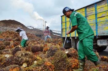 Perusahaan Wajib Bangun 20 Persen Lahan Perkebunan Untuk Masyarakat
