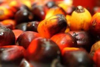 Genjot Biodiesel, Pengusaha Kelapa Sawit Bakal Kena Bea Keluar