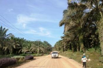 Sanksi Bagi Perusahaan Tambang dan Sawit yang Gunakan Jalan Umum