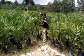 Peran dan Pelaksanaan Fungsi Pengawas Benih Tanaman (PBT) Perkebunan di Kalimantan Timur