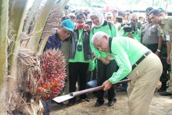Program Sejuta Hektare Sawit Kaltim Terwujud