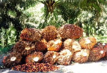 Integrasi Perkebunan dan BK CPO Dikaji