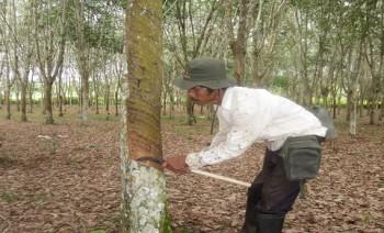 NTP Perkebunan Rakyat Merangkak Naik