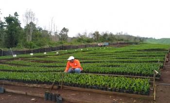 Menyongsong Tahun Benih Nasional 2018, Disbun Kembangkan Desa Mandiri Benih