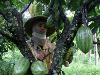 Kembangkan Perkebunan Kakao