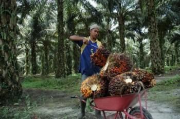 Tidak Sesuai Prediksi, Ekspor CPO Indonesia Melandai