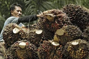 Indonesia Bawa Komoditas Perkebunan Sawit Masuk APEC