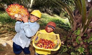 Nilai Tukar Petani Perkebunan Rakyat Naik