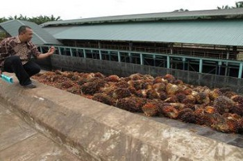 Muara Badak Perlu Tambahan Pabrik Pengolahan Sawit