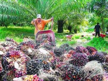 2014, Produksi CPO Indonesia Diperkirakan Mencapai 29,5 Juta Ton