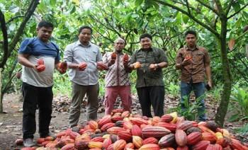 Petani Kutim Hasilkan Bibit Kakao Unggul