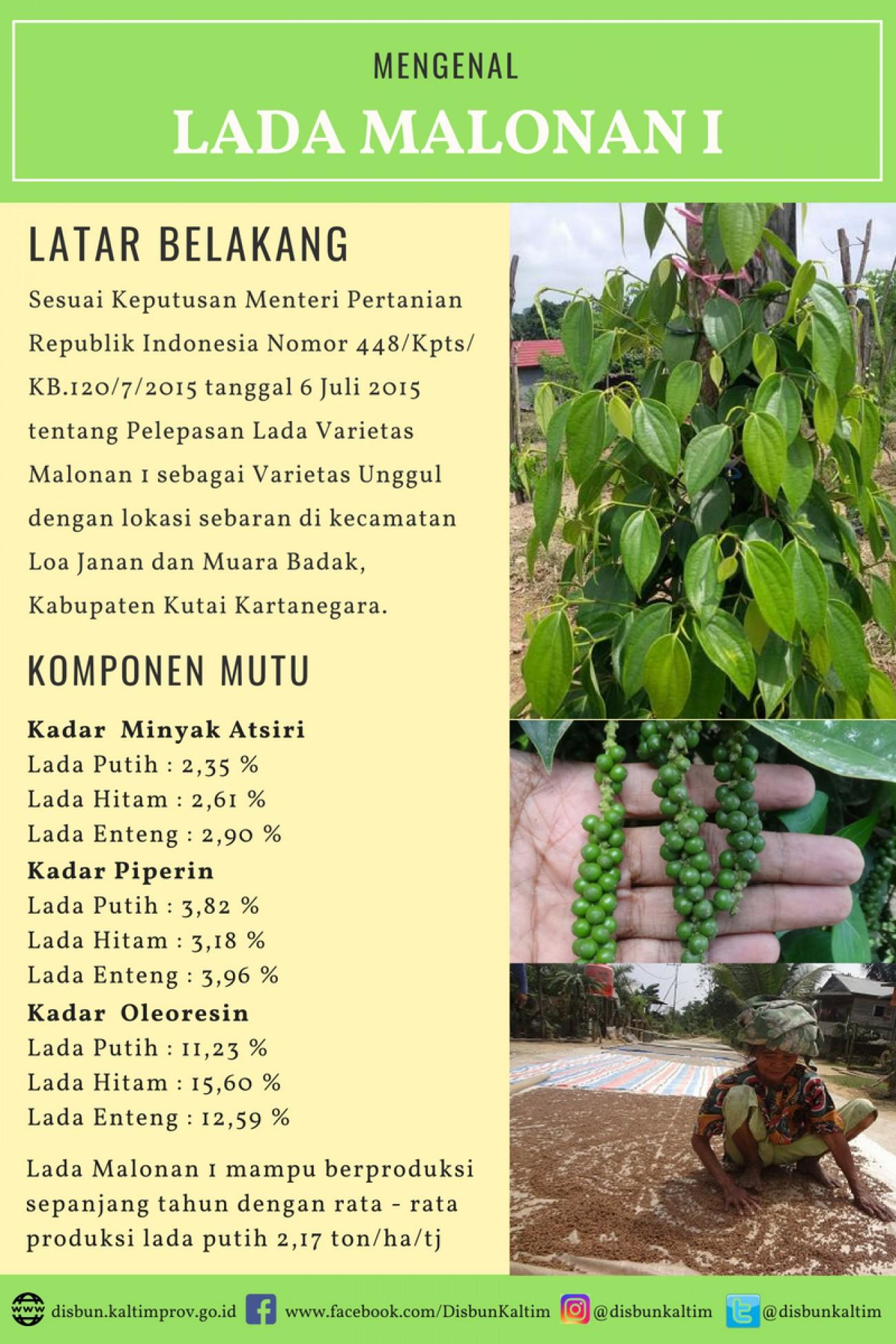 Mengenal Varietas Unggul Nasional asal Kalimantan Timur : LADA MALONAN 1